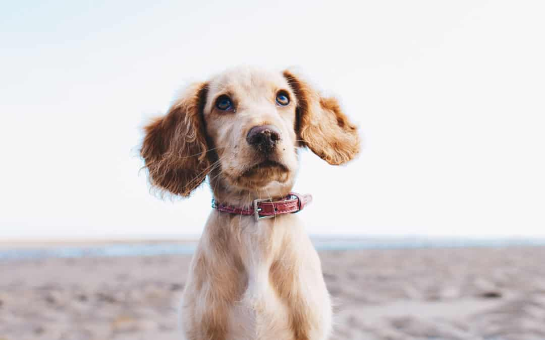 Design Responsive Web Design - A small dog on the beach look up